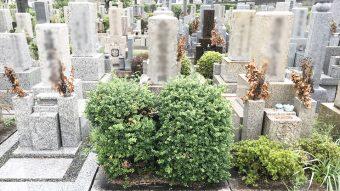 兵庫県尼崎市の尼崎市立弥生ケ丘墓園でお墓じまい